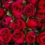 Abonament trandafiri – o luna
